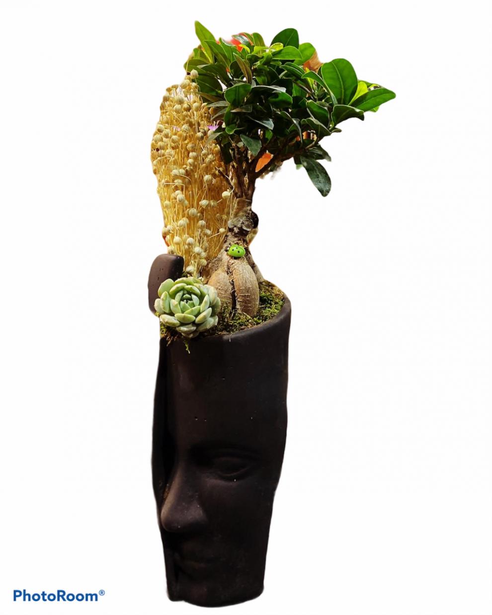 bonzai ağacı ve sukulent