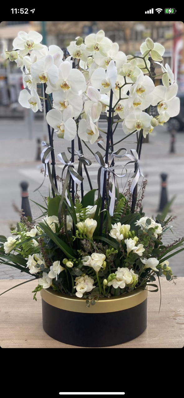 mis kokulu frezya çiçeklerle orkide arajmanı