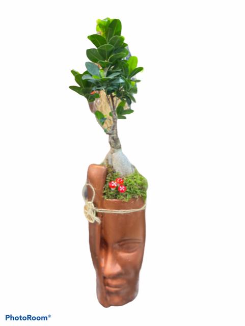 dekoratif saksıda bonzai ağacı